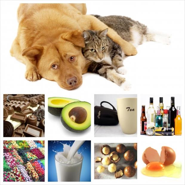 Alimentos prohibidos para perros y gatos superpiensos blog - Alimentos recomendados para perros ...