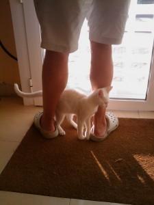 gato frotandose en las piernas