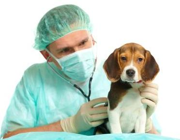 perro sano defensas