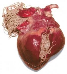 corazon-filaraia